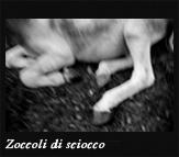 Zoccoli di sciocco, 2004