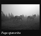 Fuga avversa, 2002