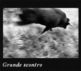 Grande scontro, 2003