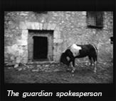 The guardian spokesperson