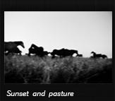 Sunset and pasture