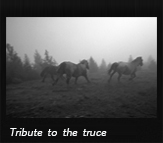 Tribute to the truce