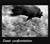 Great confrontation