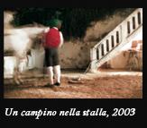 Un campino nella stalla, 2003