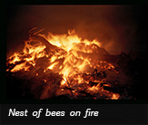 Nest of bees on fire