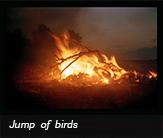 Jump of birds