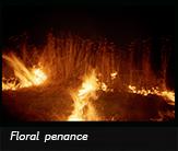 Floral penance